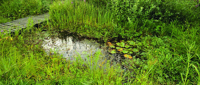Vilda 76563 Natuurlijke tuinvijver Rollin Verlinde
